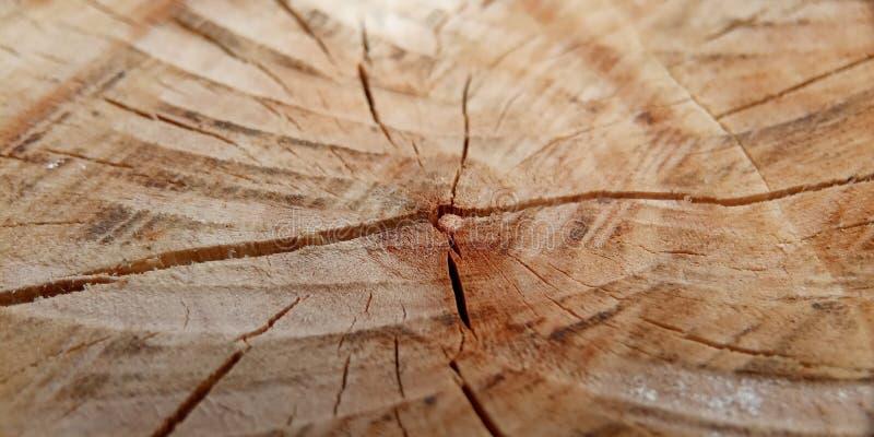 Configuration plate, à l'intérieur d'arbre, fond pour votre conception d'élément photo stock