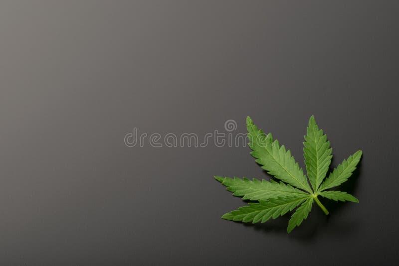 Configuration plate de vue supérieure de feuille de marijuana photo libre de droits