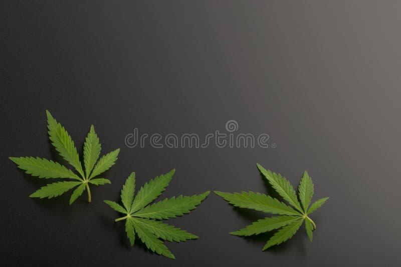Configuration plate de vue supérieure de feuille de marijuana image libre de droits