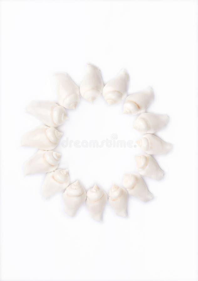 Configuration ronde de Seashell photographie stock libre de droits