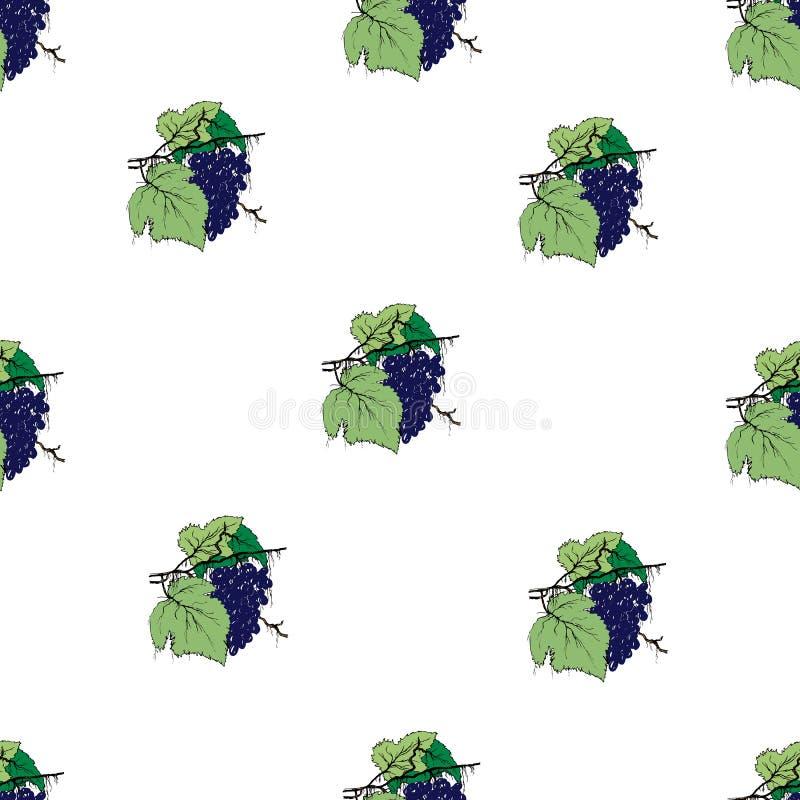 Configuration sans joint avec des raisins Fond clair d'?t? Une branche tirée par la main de raisin avec des feuilles sur un fond  illustration stock