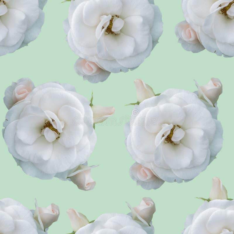 Configuration sans joint avec des roses photographie stock