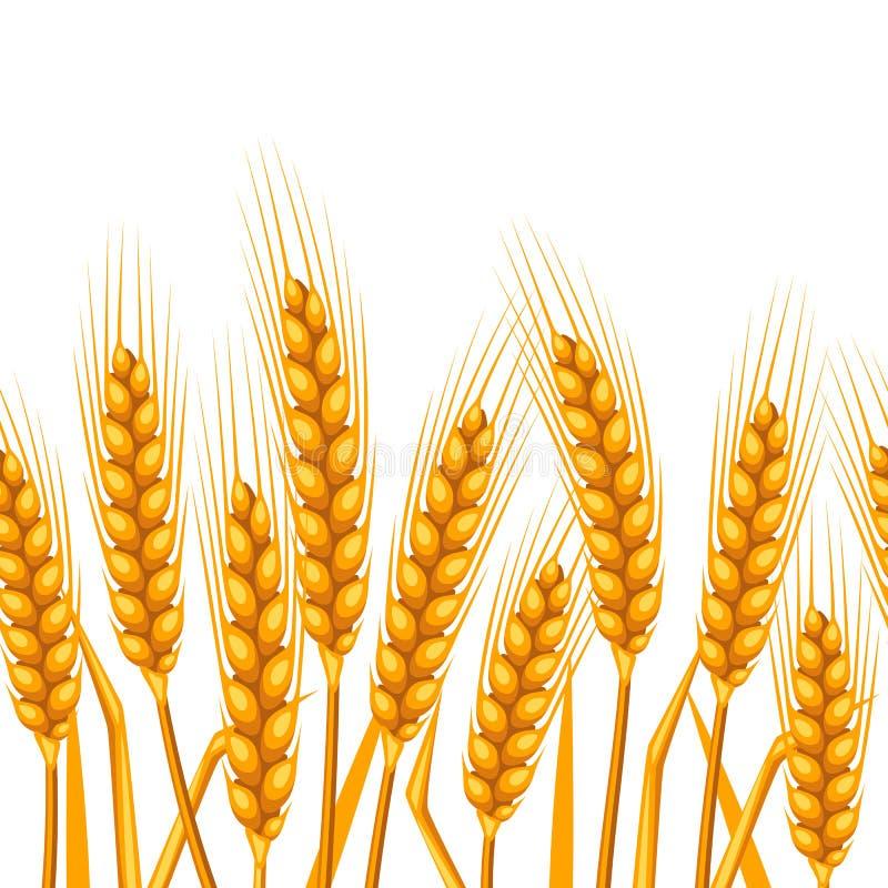 Configuration sans joint avec du blé Oreilles d'or naturelles d'image agricole d'orge ou de seigle illustration libre de droits