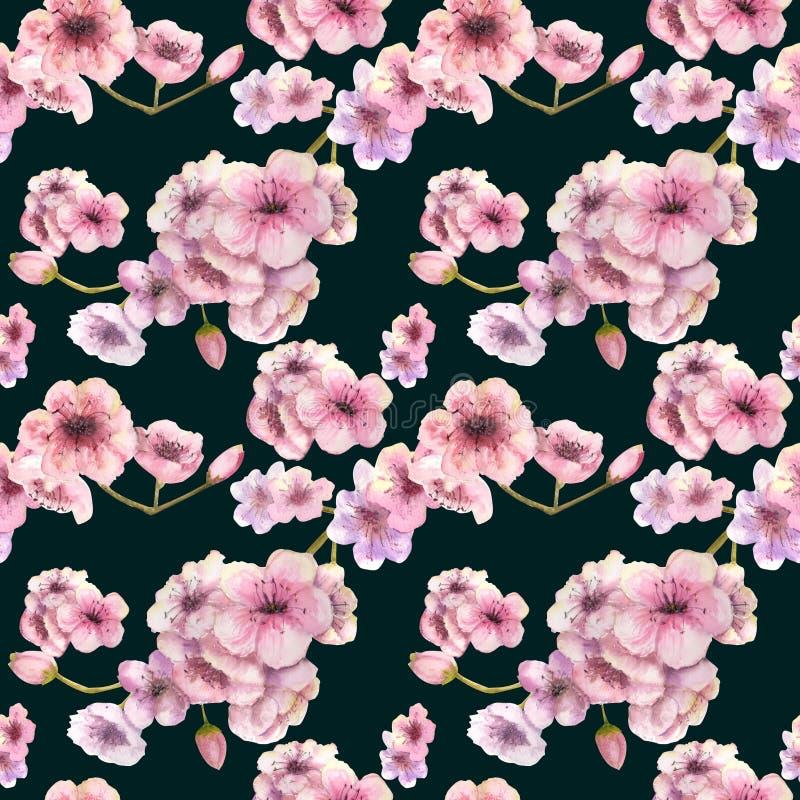 Configuration sans joint Couleur de cerise Branche de Sakura avec les fleurs roses Image de ressort Vue Illustration d'aquarelle  illustration libre de droits