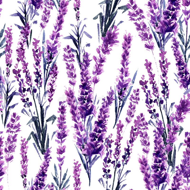 Configuration sans joint de lavande Peintures d'aquarelle ou d'aquarelle de Lavandula illustration stock