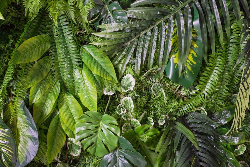 Configuration tropicale de lames Usines exotiques de feuille verte sans couture sur un fond foncé de jungle Collage artistique de image libre de droits