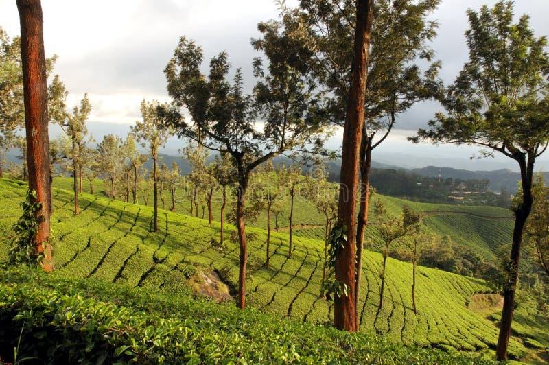 Configuration verte de jardin de lame (mer photographie stock libre de droits