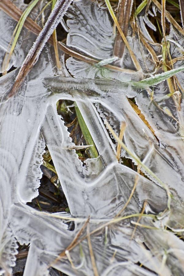 Configurations de glace dans le feuillage figé image stock