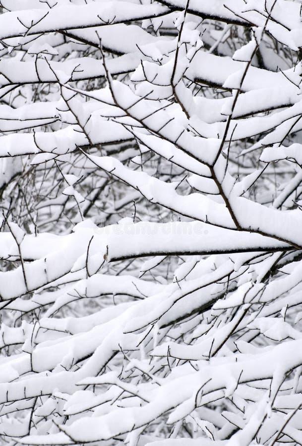 Configurations de neige sur des arbres photo libre de droits
