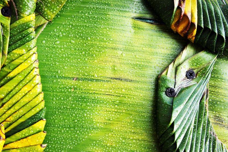 Configurations des lames de banane images stock