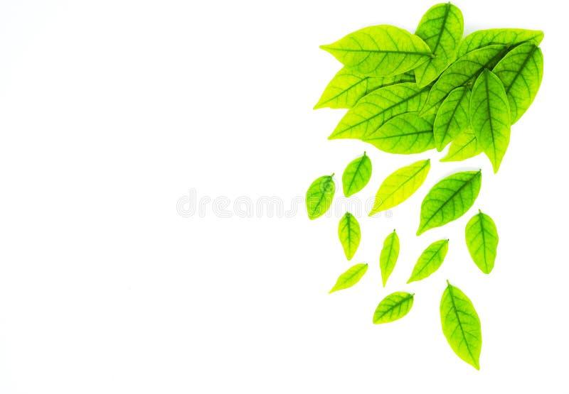 Confine con la foglia verde, fondo per progettazione su Libro Bianco immagine stock libera da diritti