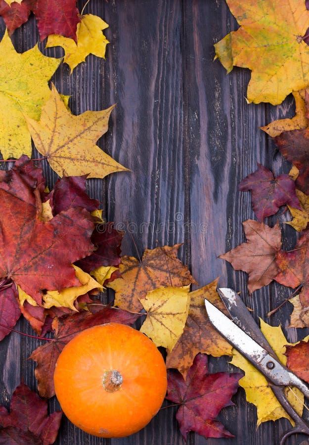 Confine d'annata di autunno dalle foglie cadute su fondo rustico di legno Concetto di giorno di ringraziamento immagini stock libere da diritti