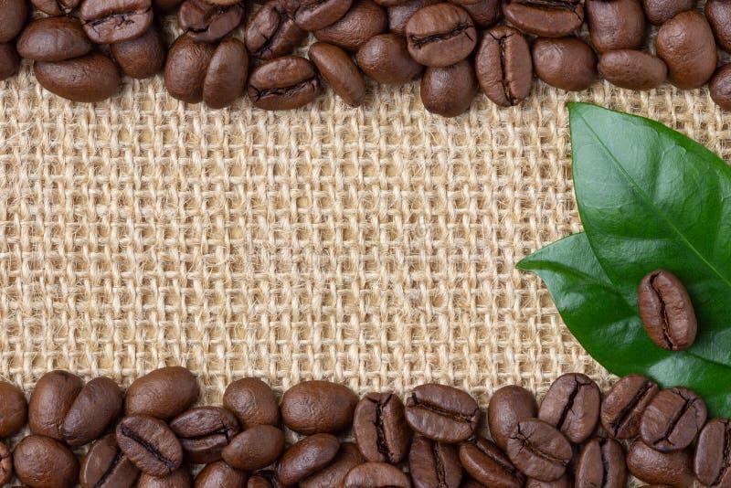 Confine del caffè Fagioli e foglia sopra il fondo della tela da imballaggio fotografia stock libera da diritti