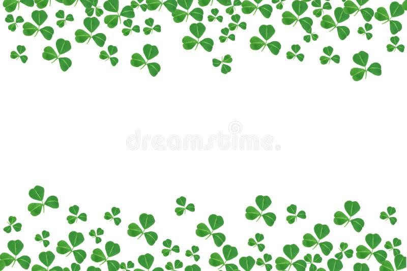 Confine del doppio di giorno della st Patricks delle acetoselle sopra bianco illustrazione vettoriale