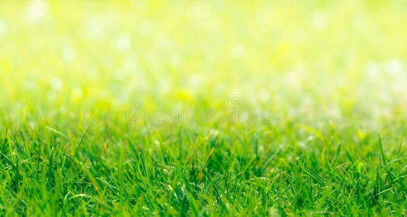 Confine dell'erba verde con sfondo naturale Defocused fotografia stock