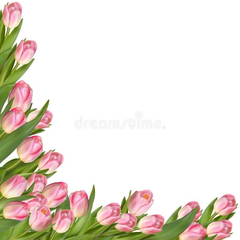 Confine della molla del fiore del tulipano ENV 10 illustrazione di stock