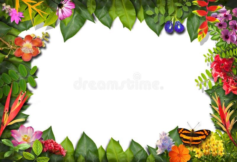 Confine della natura con il fiore e la foglia verde fotografie stock libere da diritti