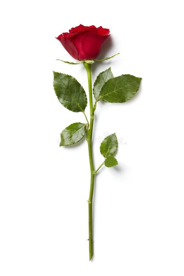 Confine della rosa rossa immagine stock libera da diritti