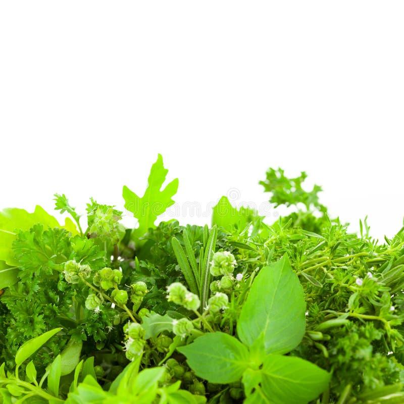 Confine delle erbe fresche differenti della spezia sopra fondo bianco immagine stock libera da diritti
