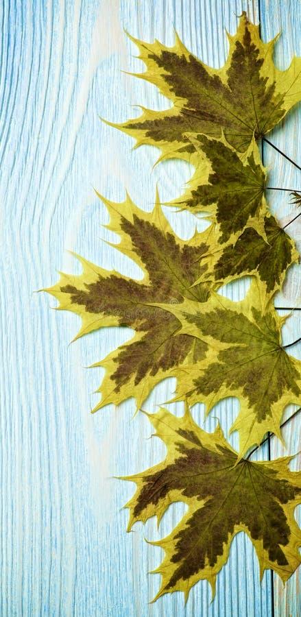 Confine delle foglie di acero fotografia stock libera da diritti