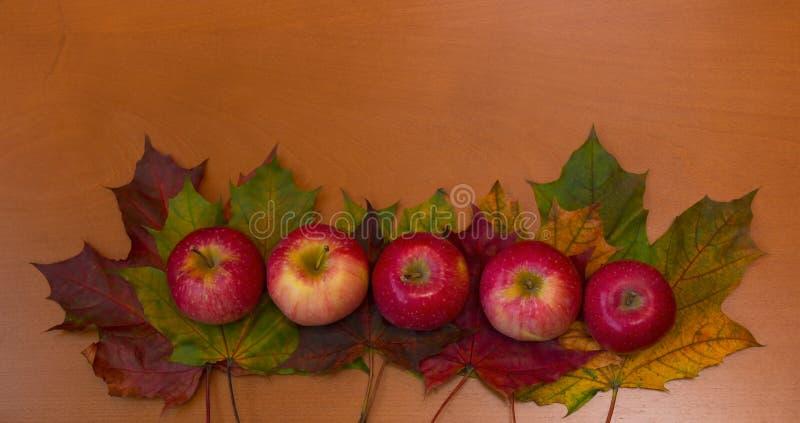 Confine delle foglie di acero variopinte e delle mele immagini stock libere da diritti