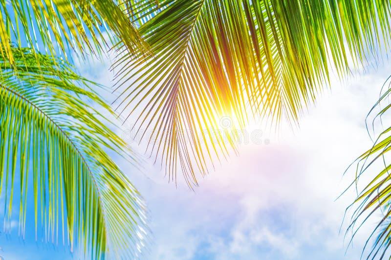 Confine delle foglie di palma fotografia stock libera da diritti