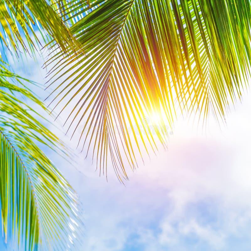 Confine delle foglie di palma fotografia stock