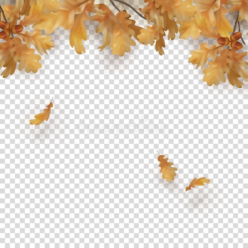 Confine di autunno con le foglie della quercia illustrazione vettoriale