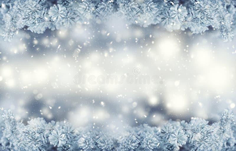 Confine di natale e di inverno Gelo coperto dei rami di pino in atmosfera nevosa immagini stock libere da diritti