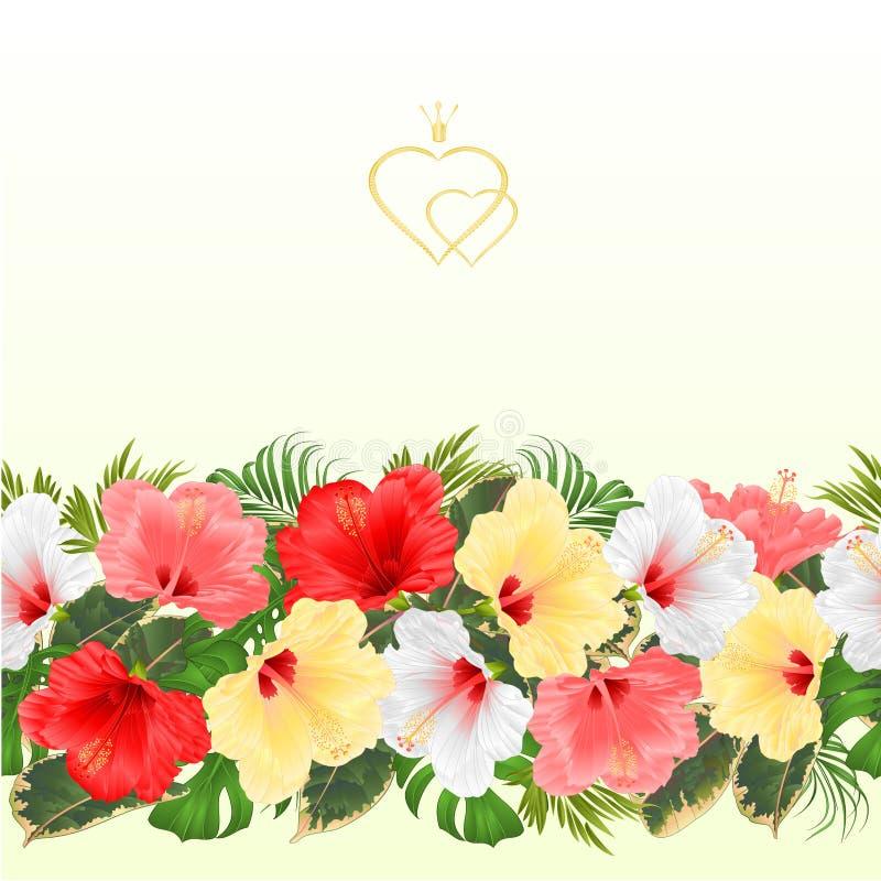 Confine el ejemplo rosado rojo amarillo blanco para el uso en diseño interior, ilustraciones del vector de los flovers hibisco in ilustración del vector
