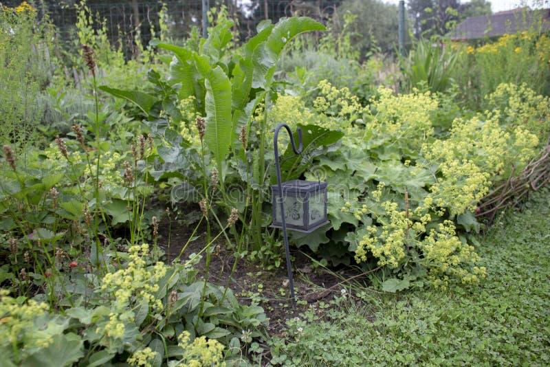 Confine erbaceo nel giardino del cottage immagini stock