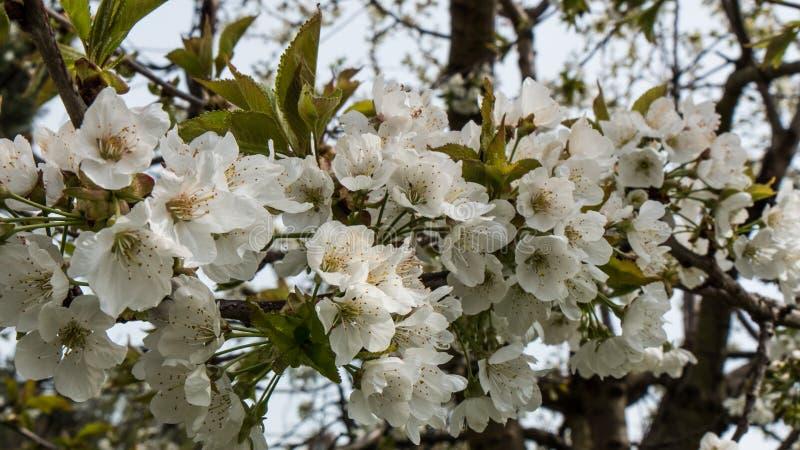 confine floreale astratto delle foglie verdi e dei fiori bianchi fotografia stock libera da diritti
