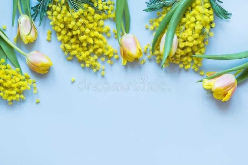 Confine floreale dei tulipani gialli, mimosa della primavera sul blu Vista superiore con lo spazio della copia immagine stock