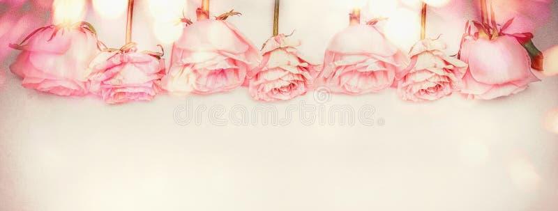 Confine floreale della rosa di rosa con illuminazione del bokeh, colore pastello fotografia stock