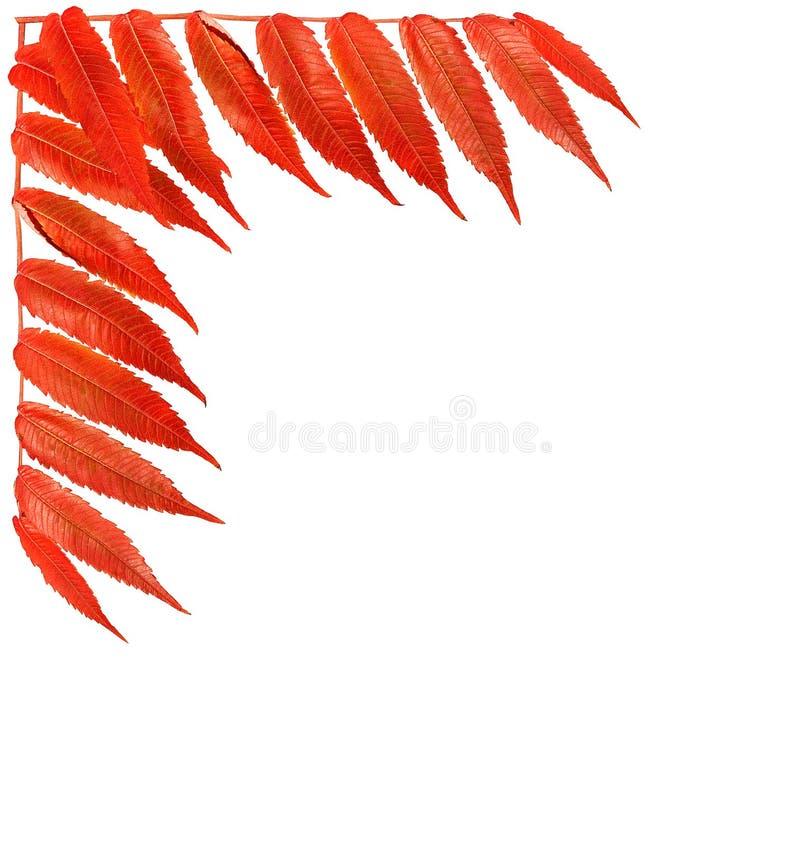 Confine luminoso con le foglie arancio immagini stock