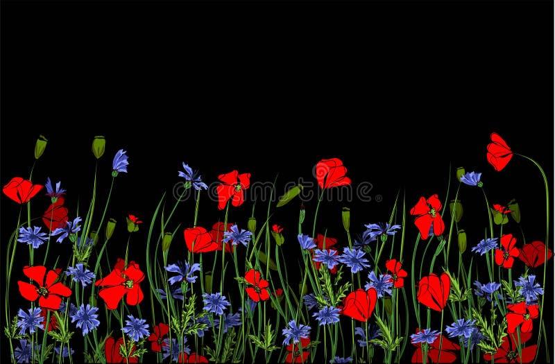 Confine orizzontale con i fiori del campo isolati su bianco Illustrazione di vettore Progettazione dei fiori di estate royalty illustrazione gratis