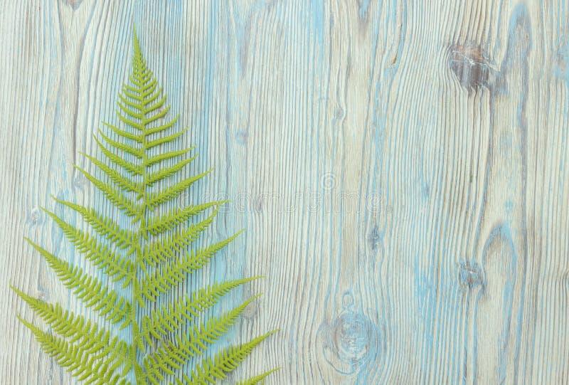 Confine selvaggio della felce della foresta verde, monogramma fotografia stock libera da diritti