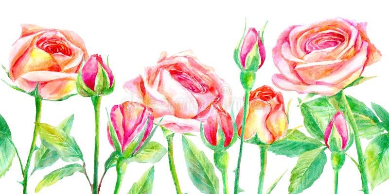 Confine senza cuciture dell'rose Briar ed erbe illustrazione di stock