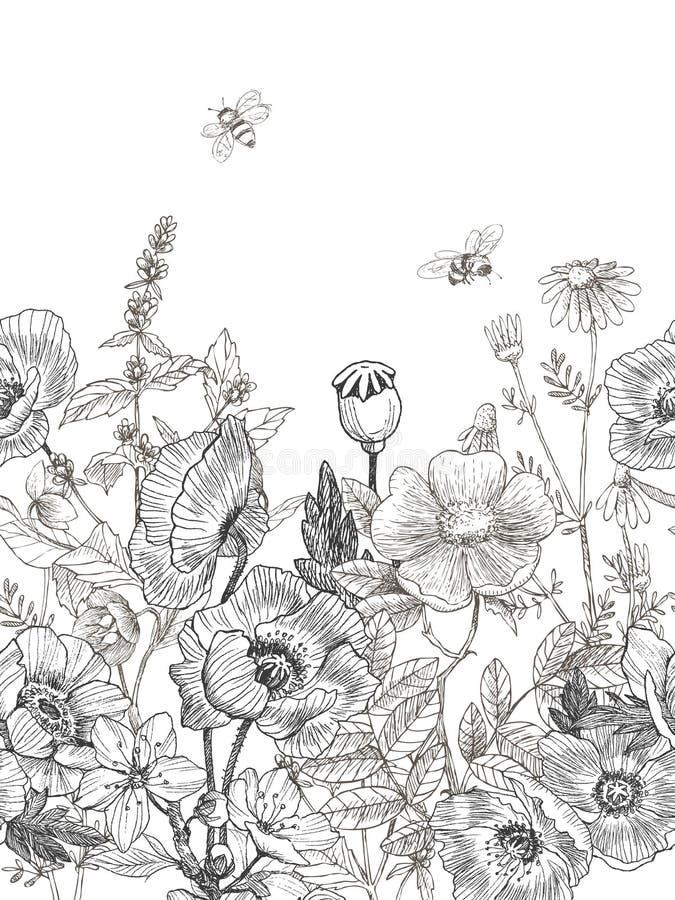 Confine senza cuciture delle erbe e selvaggio delle piante Illustrazione disegnata a mano botanica d'annata Piovuto appena sopra royalty illustrazione gratis