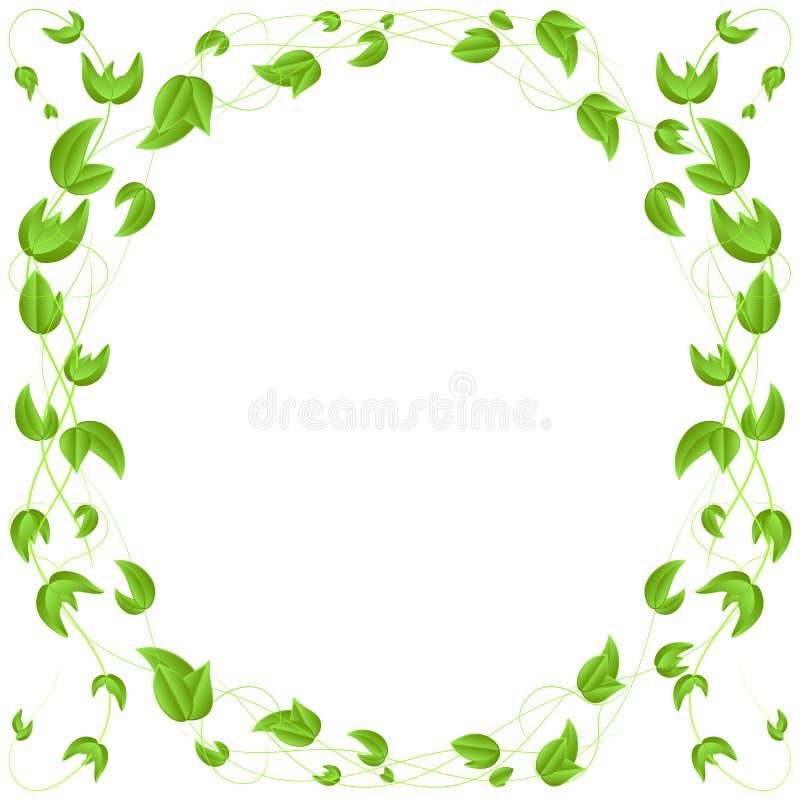 Confine verde della foglia, isolato su fondo bianco illustrazione di stock