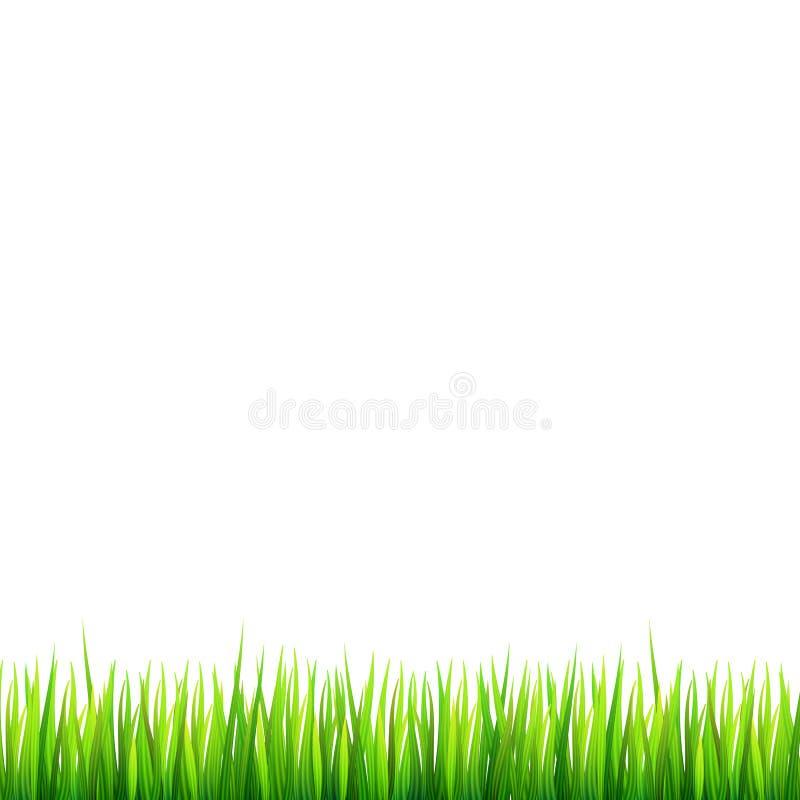 Confine verde e naturale dell'erba con le margherite bianche, fiore della camomilla e piccola coccinella rossa su fondo bianco Mo illustrazione di stock