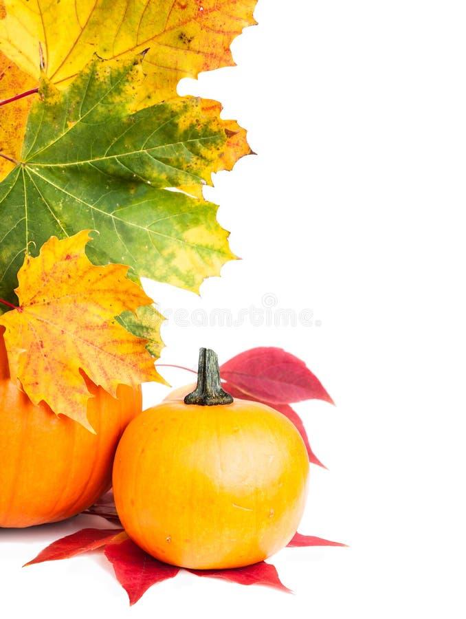 Confine verticale del bordo di autunno immagini stock