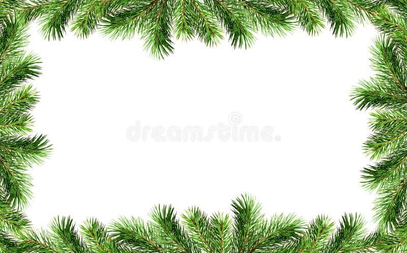 Confini verdi dei ramoscelli dell'albero di Natale immagine stock