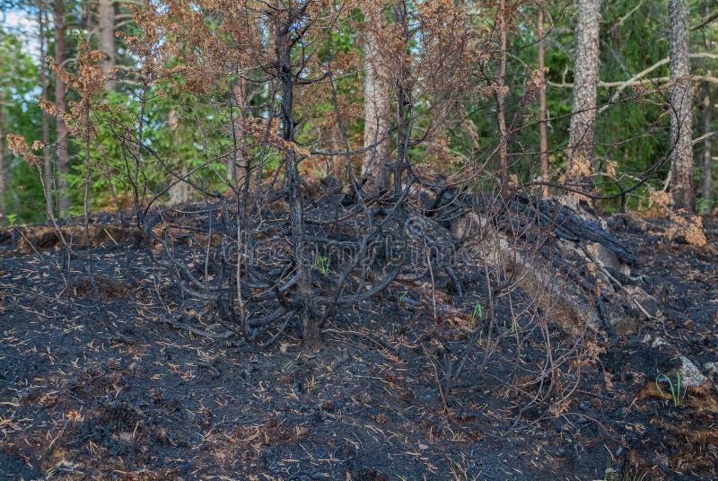 Conflagración. - Paisaje natural de los bosques quemados - Parque nacional imagenes de archivo