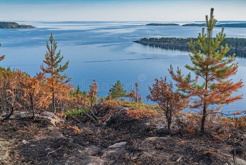 conflagraci?n. - Paisaje natural de los bosques quemados - Parque nacional fotografía de archivo