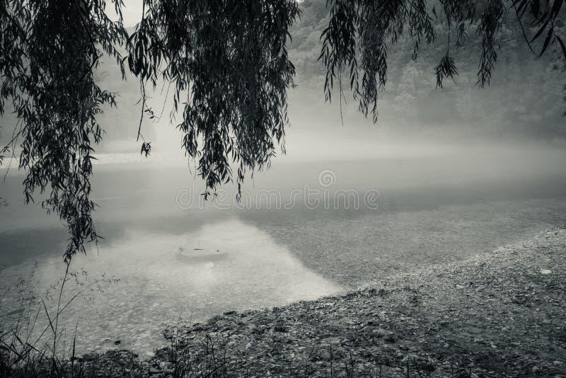 Confluent brumeux de rivière de Soca et de Tolminka en Slovénie images stock
