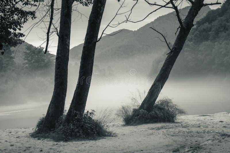 Confluent brumeux de rivière de Soca et de Tolminka en Slovénie photo stock