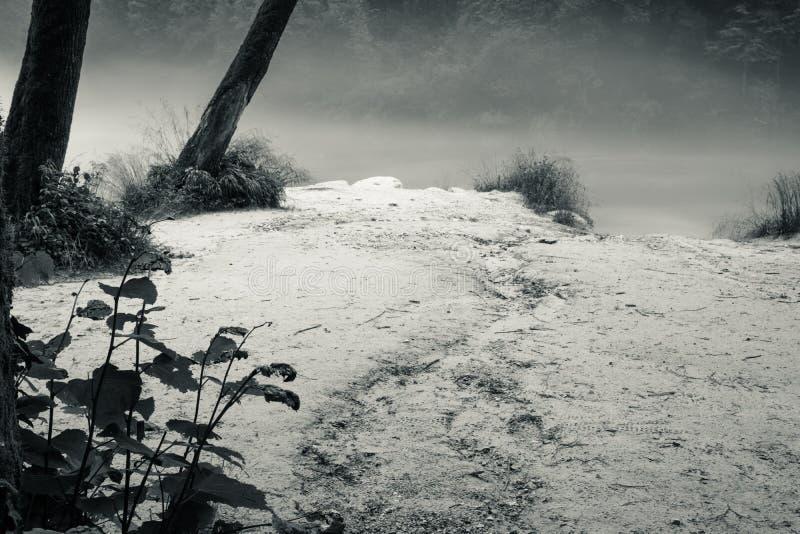 Confluent brumeux de rivière de Soca et de Tolminka en Slovénie photographie stock libre de droits