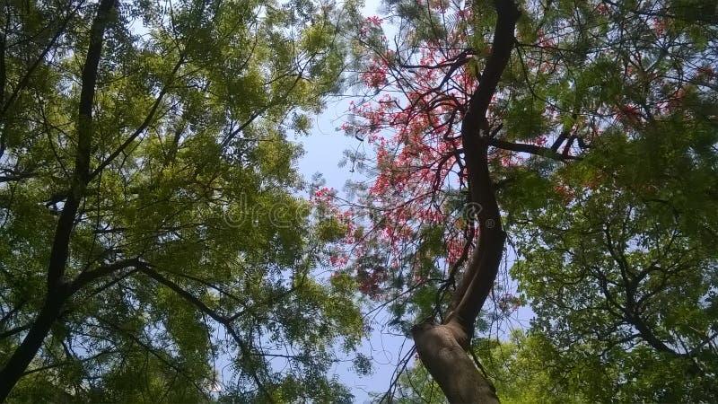 Confluenza dei colori della natura fotografia stock