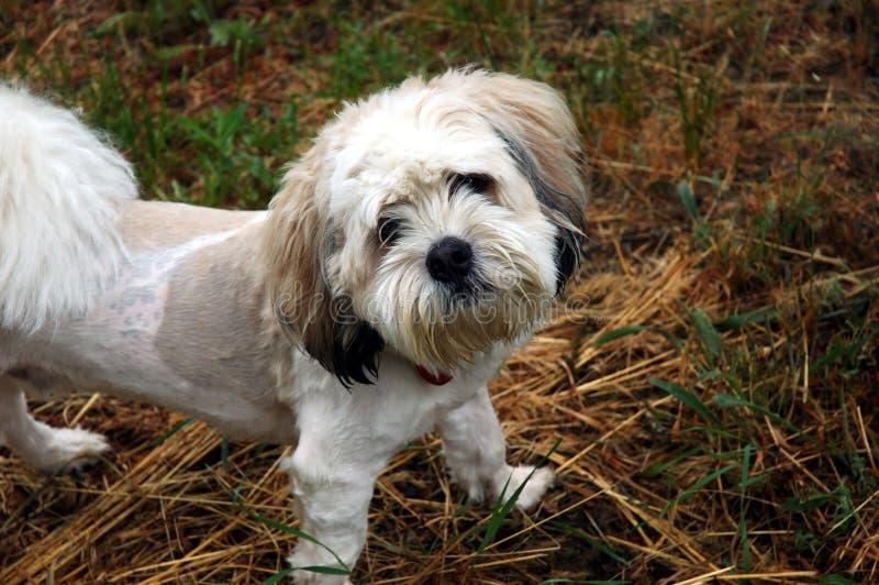 confused собака стоковая фотография rf